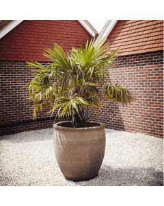 Ironstone Giant Planter 83cm